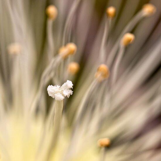 Inner life  of a flower by Celeste Mookherjee