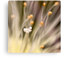 Inner life  of a flower Canvas Print