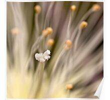 Inner life  of a flower Poster