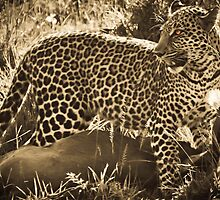 Leopard Lunch by Jill Fisher