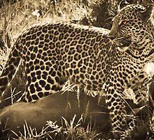 Leopard Lunch by Jill Fisher