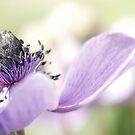 a floral symphony by sapaho