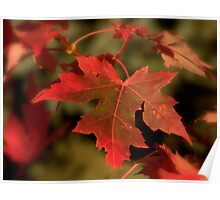 Fall Red Poster