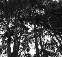 Tree Canopy III, Bute Park, Cardiff by Artberry