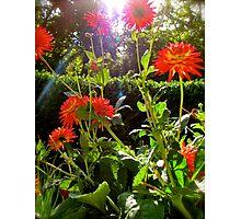 Flowers Flower Photographic Print