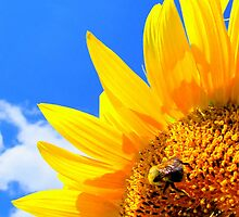 BEEhind and a Sunflower by Debbie Robbins