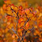 Autumn Leaves by Betsy  Seeton