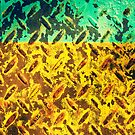 horizon by scottimages