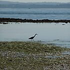 Heron: Phillip Island, Australia by Sally Kate Yeoman