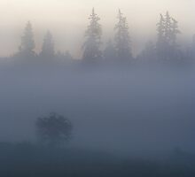Early Morning. by Todd Rollins