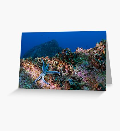 Blue starfish on rock (phataria unifascialis), underwater view, Ecuador, Galapagos Archipelago, Espanola Island Greeting Card