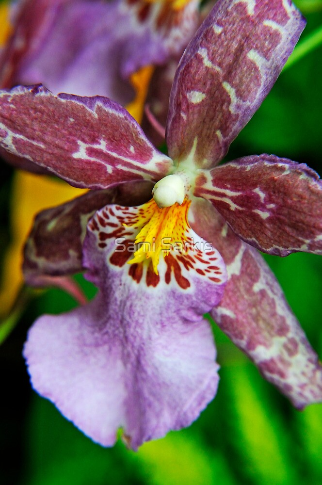 Purple Orchids by Sami Sarkis