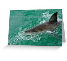 Great White Shark (Carcharodon carcharias) breaking waters surface, Gansbaii, Dyer Island, South Africa Greeting Card