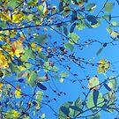 Birch Leaves by Kitsmumma