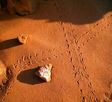 Lizard Tracks - Broome, WA. by Akrotiri