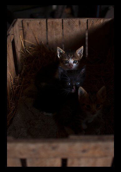 A small cats by julien  oncete