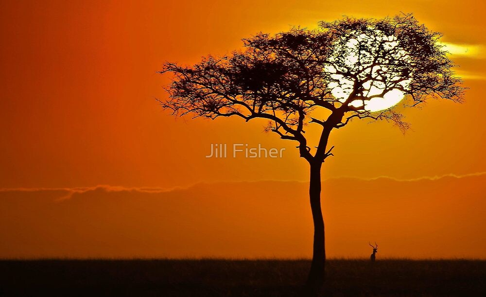 The Majesty of Morning by Jill Fisher