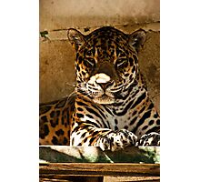 a lovley jag. Photographic Print