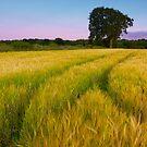 Sunset Tree by KitDowney
