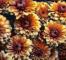 Potted Rusty Chrysthanthemum by T.J. Martin