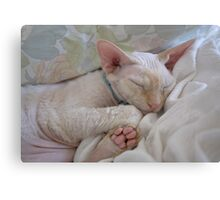 Oliver Sleeping Canvas Print