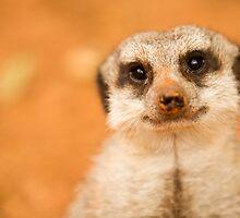 Meerkat by Mike Garner