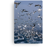 Flock of seagulls in the sea and in flight, Marseille, France. Canvas Print