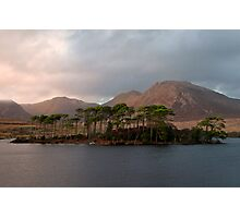 Pine island Derryclare Lough. Photographic Print