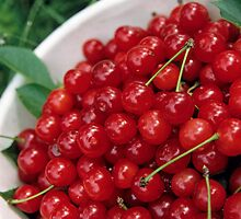 Bowl of cherries, close-up by Sami Sarkis