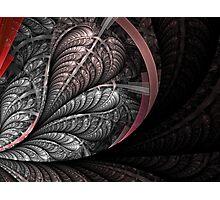 Breach-Petals Photographic Print