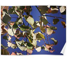 Autumn Leaves & Blue Sky Poster
