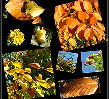 Autumn Leaves, Flowers and Berries Collage by BlueMoonRose