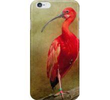 Red Ibis iPhone case iPhone Case/Skin