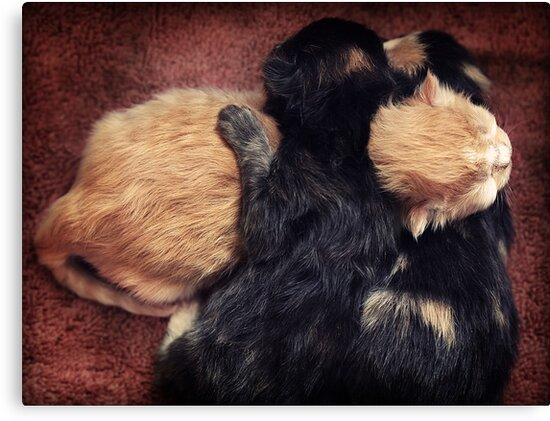 Kitten Cuddle by micklyn