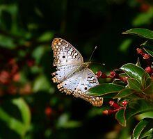 Butterfly by KPrecious