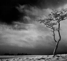 Phoenix Park Tree in Infra Red by Dave  Kennedy