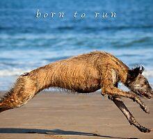 born to run by loyal-lurchers