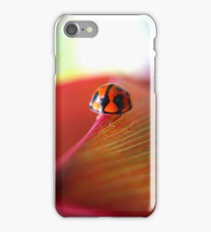 Ladybird on Cordyline iPhone Case iPhone Case/Skin