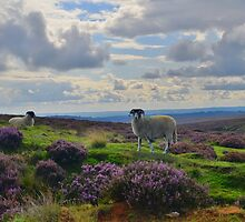 Yorkshire: A Moorland Scene by Rob Parsons