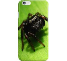 Spider on my Phone iPhone Case iPhone Case/Skin