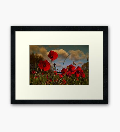 Poppy Field 2 Framed Print