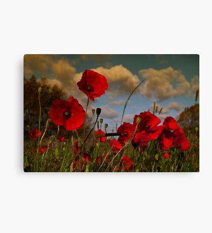 Poppy Field 2 Canvas Print