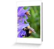 Bumble Bee and Honey Bee Diving For Nectar Greeting Card