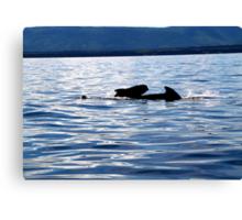 Pilot Whale and Calf  Canvas Print