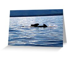 Pilot Whale and Calf  Greeting Card