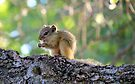 Tree squirrel by Elizabeth Kendall