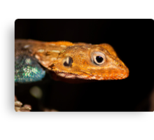Agama Lizard Canvas Print
