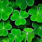 4 Leaf Clover by Maggie Lowe
