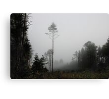 Foggy morning in autumn forest Canvas Print