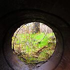 Through an Abandoned Culvert by RevJoc